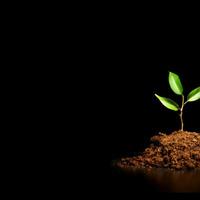 Spiritual Growth Team