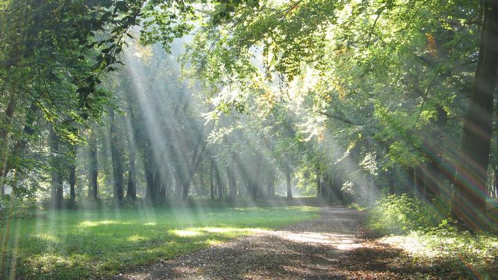 Medium lighted path image