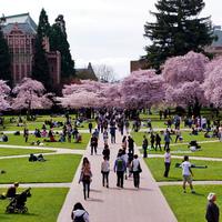 University of Washington Fellowship